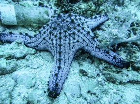 One of many different sea stars