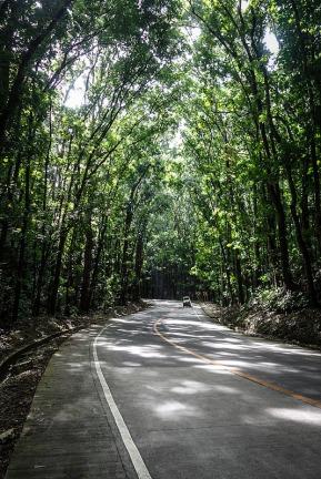The man-made Bilar Forest